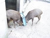 日本動物園之旅第三天:DSC05468.JPG