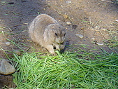 2004日本動物園之旅第二天:DSC05377.JPG