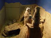 2004日本動物園之旅第二天:DSC05391.JPG