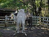 2004日本動物園之旅第二天:DSC05395.JPG