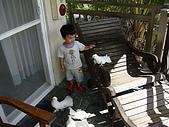20090521-23:早安餵鴿子1.jpg