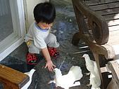 20090521-23:早安餵鴿子2.jpg