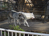 日本動物園之旅第三天:DSC05525.JPG