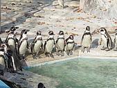 日本動物園之旅第三天:DSC05492.JPG