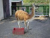 日本動物園之旅第三天:DSC05510.JPG