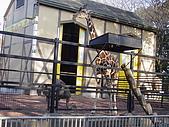 日本動物園之旅第三天:DSC05516.JPG