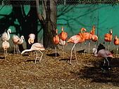 2004日本動物園之旅第二天:DSC05322.JPG