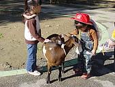 2004日本動物園之旅第二天:DSC05351.JPG