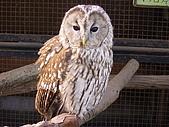 2004日本動物園之旅第二天:DSC05363.JPG