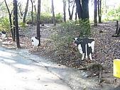 2004日本動物園之旅第二天:DSC05370.JPG
