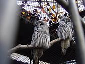 日本動物園之旅第三天:DSC05477.JPG