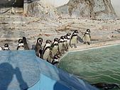 日本動物園之旅第三天:DSC05489.JPG