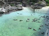 日本行DAY3*葛西海洋公園*:1834163649.jpg