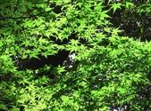 日本行DAY2*庭園之旅*:1416664384.jpg