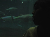 日本行DAY3*葛西海洋公園*:1834163645.jpg