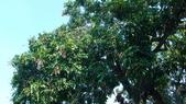 sun波羅蜜0920608383:DSC04127.JPG