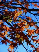 2011-12-18 稍來山步道-楓紅:2011121711.JPG