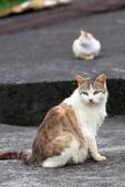 貓 喵~:2012-04-02_0002.jpg