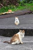 貓 喵~:2012-04-02_0003.jpg