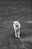 貓 喵~:2012-04-02_0009.jpg