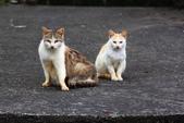 貓 喵~:2012-04-02__0004.jpg