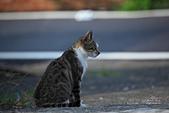 貓 喵~:2013060104.JPG