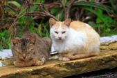 貓 喵~:2012-04-02__0005.jpg