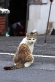 貓 喵~:2012-04-02__0006.jpg