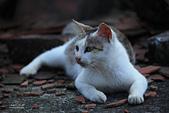 貓 喵~:2013060105.JPG