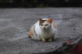 貓 喵~:2012-04-02__0007.jpg