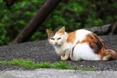 貓 喵~:2012-04-02__0008.jpg