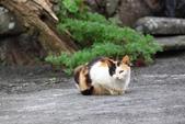 貓 喵~:2012-04-02__0011.jpg