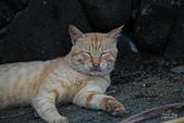 貓 喵~:2013060107.JPG