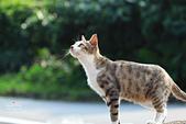 貓 喵~:2013060108.JPG