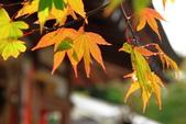 2010-10-23 京都-大阪:20101025_03.JPG