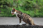 貓 喵~:2013060112.JPG