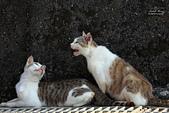 貓 喵~:2013060114.JPG