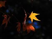 2011-12-18 稍來山步道-楓紅:2011121710.JPG