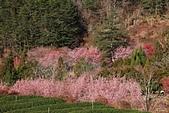 2014-02-22 武陵農場:20140202201.JPG