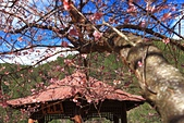 2014-02-22 武陵農場:20140202202.JPG