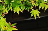 2010-10-23 京都-大阪:20101025_02.JPG