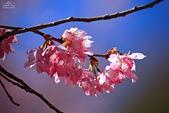 2014-02-22 武陵農場:20140202205.JPG