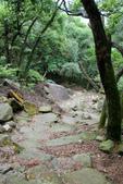 105(2016)年4月30日-金面山親山步道:AA2016-0430-金面山親山步道14.jpg