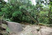 105(2016)年4月30日-金面山親山步道:AA2016-0430-金面山親山步道13.jpg