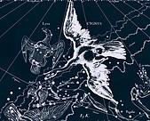 西洋星座手繪線描圖:Cygnus   -   Лебедь.JPG