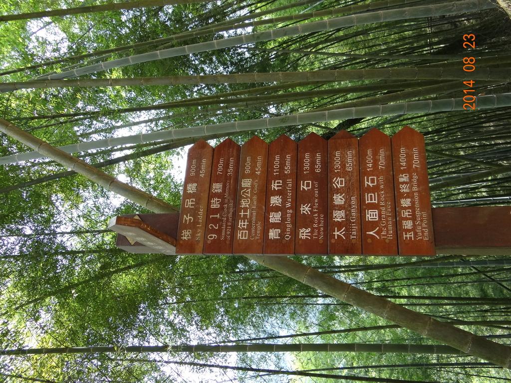 20140823溪頭新明山:DSC06795.JPG