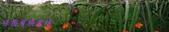 農場作物:2014-12-15 16.33.440.jpg