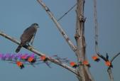 園區鳥類:102.12.04 031.jpg