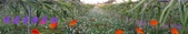 農場作物:2014-12-15 16.35.020.jpg