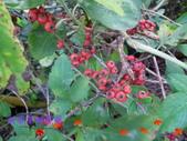 緣園的花草茶:2014-12-08 20.14.520.jpg